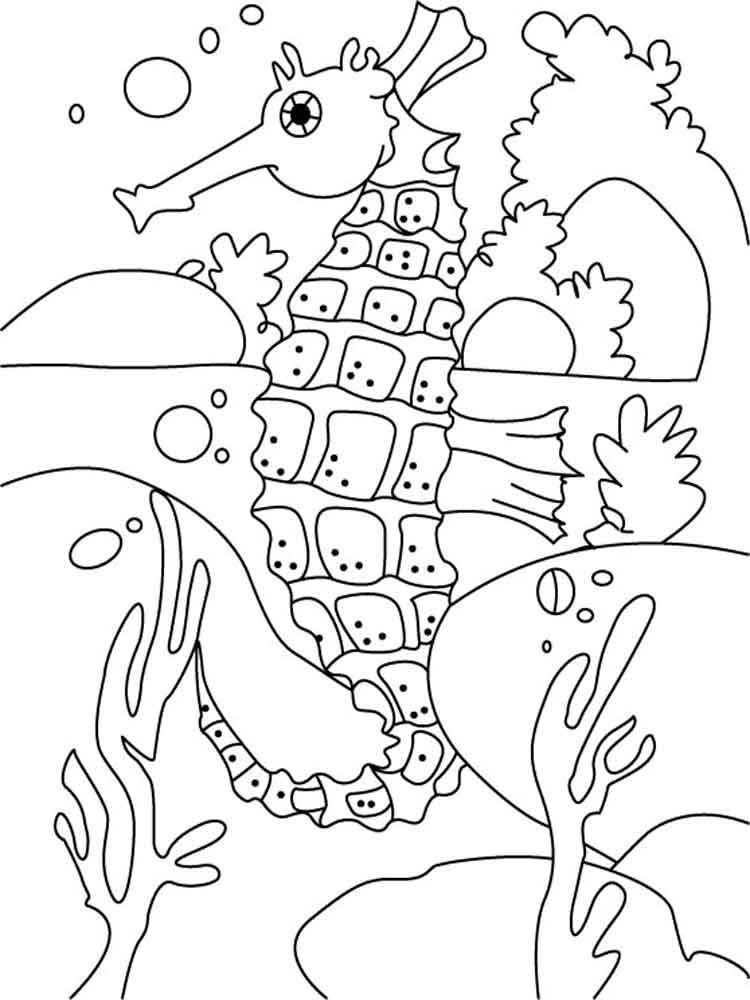 malvorlagen seepferdchen  ausmalbilder kostenlos zum