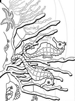 Seahorse-coloring pages-1
