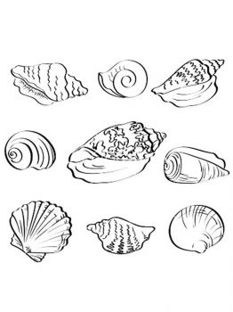 Seashell-coloring-pages-2