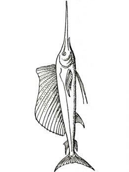 Swordfish-coloring pages-10