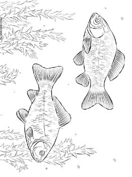 crucian-coloring-pages-2