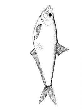 sea-fish-coloring-pages-15