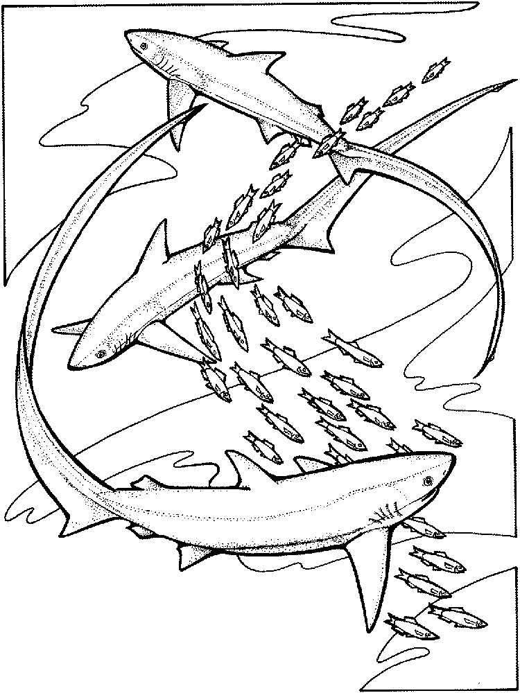 malvorlagen hai  ausmalbilder kostenlos zum ausdrucken