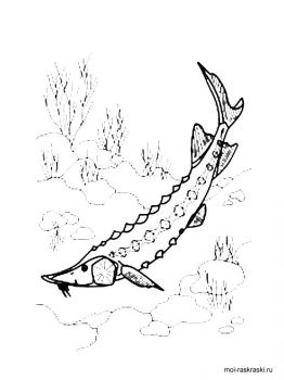 sturgeon-coloring-pages-1