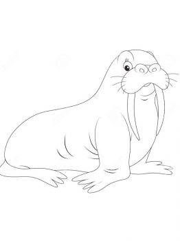walrus-coloring-pages-1