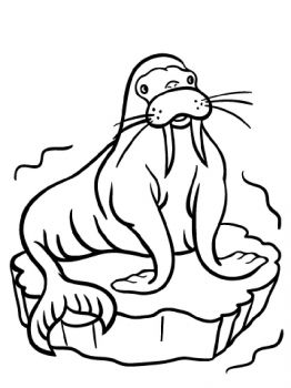 walrus-coloring-pages-3