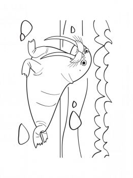 walrus-coloring-pages-8