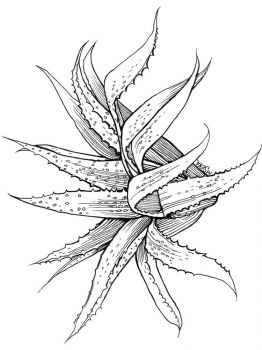 Aloe-coloring-pages-3