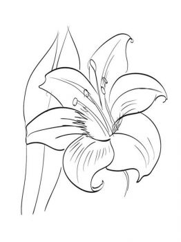 Amaryllis-coloring-pages-2