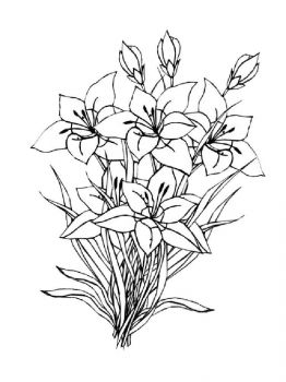 Amaryllis-coloring-pages-3