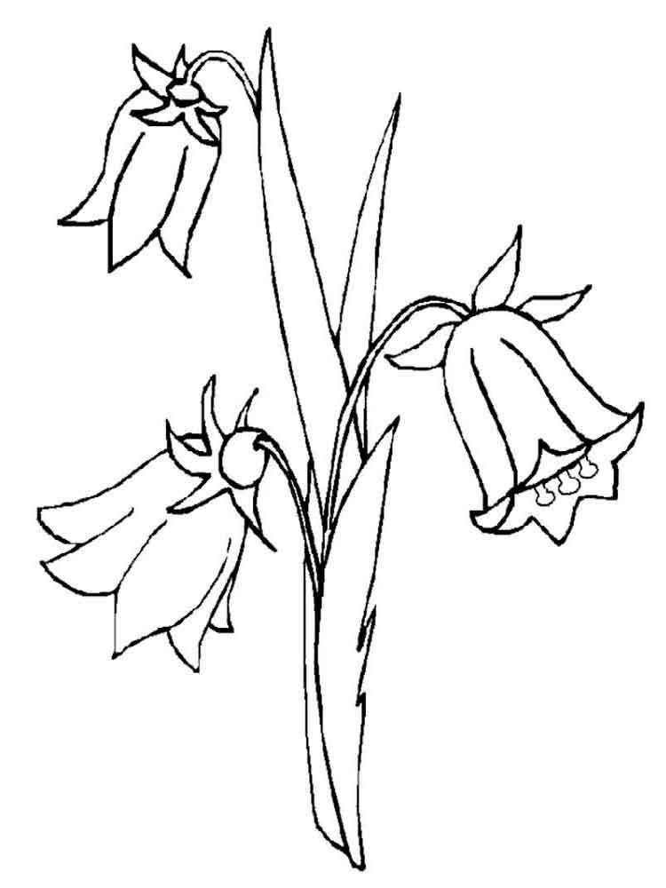 ausmalbilder glockenblume  malvorlagen kostenlos zum