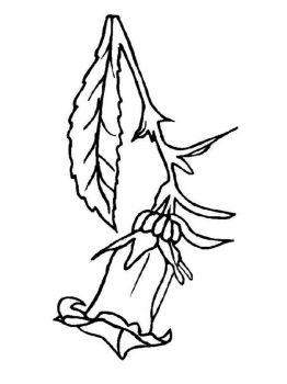 Bellflower-coloring-pages-2