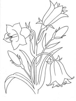 Bellflower-coloring-pages-5