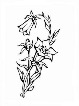 Bellflower-coloring-pages-9