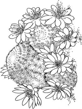 Cactus-flower-coloring-pages-4