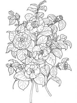 Camellia-flower-coloring-pages-1