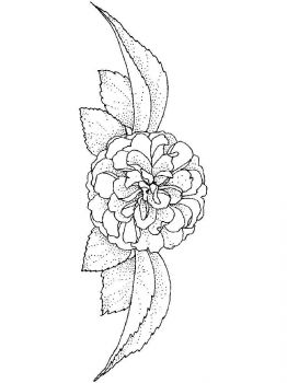 Camellia-flower-coloring-pages-11