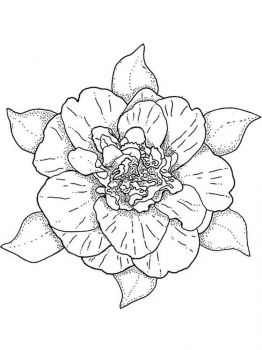 Camellia-flower-coloring-pages-2