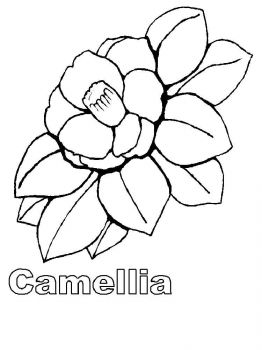 Camellia-flower-coloring-pages-3