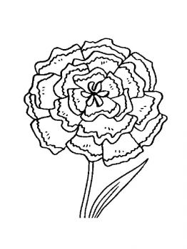 Carnation-flower-coloring-pages-11
