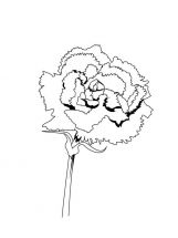 Carnation-flower-coloring-pages-4