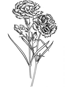 Carnation-flower-coloring-pages-6