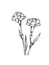 Carnation-flower-coloring-pages-7