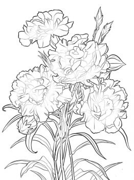 Carnation-flower-coloring-pages-8
