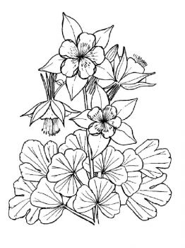 Columbine-flower-coloring-pages-1