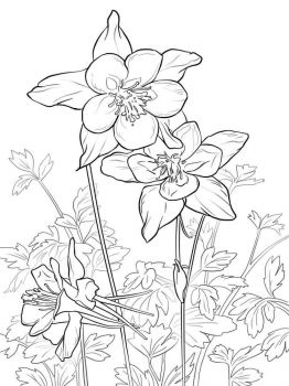 Columbine-flower-coloring-pages-9