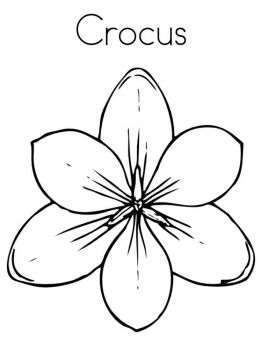 Crocus-flower-coloring-pages-1