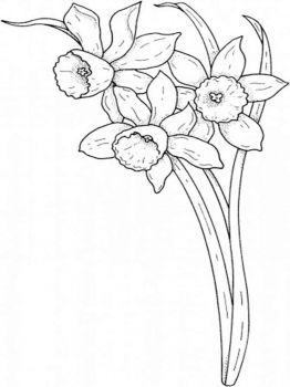 Daffodil-flower-coloring-pages-3