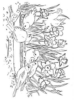 Daffodil-flower-coloring-pages-6