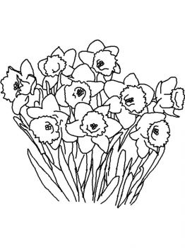 Daffodil-flower-coloring-pages-9