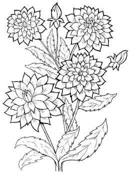 Dahlia-flower-coloring-pages-1