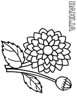 Dahlia-flower-coloring-pages-3