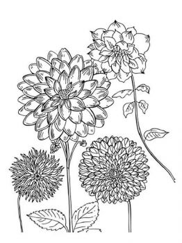 Dahlia-flower-coloring-pages-5