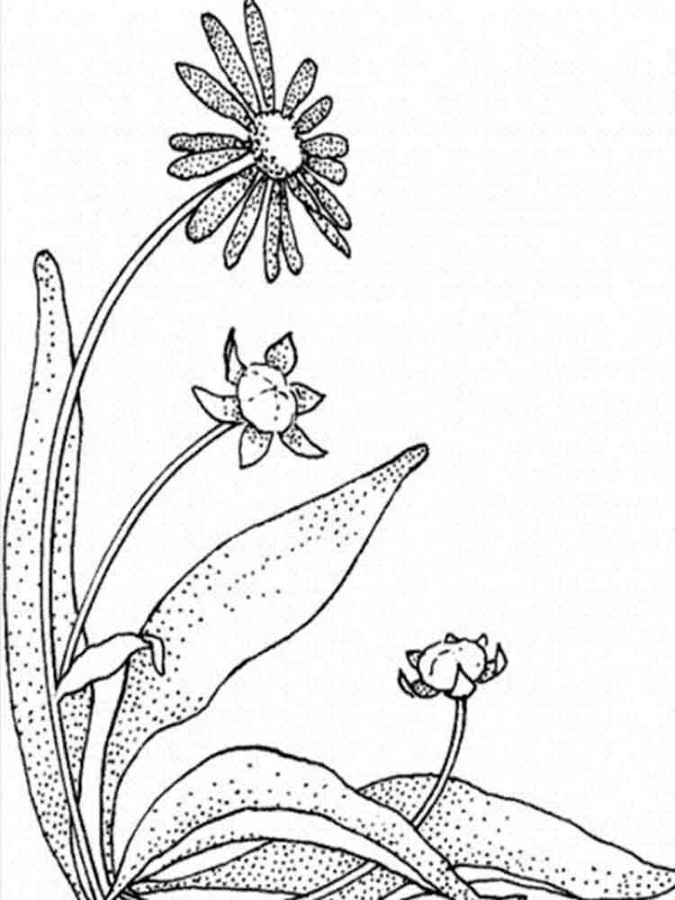 ausmalbilder gänseblümchen  malvorlagen kostenlos zum