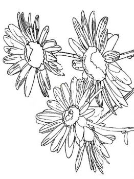 Daisy-flower-coloring-pages-2