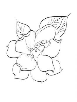 Gardenia-flower-coloring-pages-2