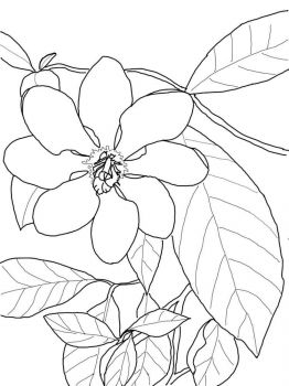 Gardenia-flower-coloring-pages-3