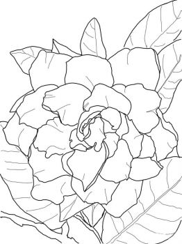 Gardenia-flower-coloring-pages-6