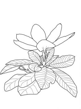 Gardenia-flower-coloring-pages-7
