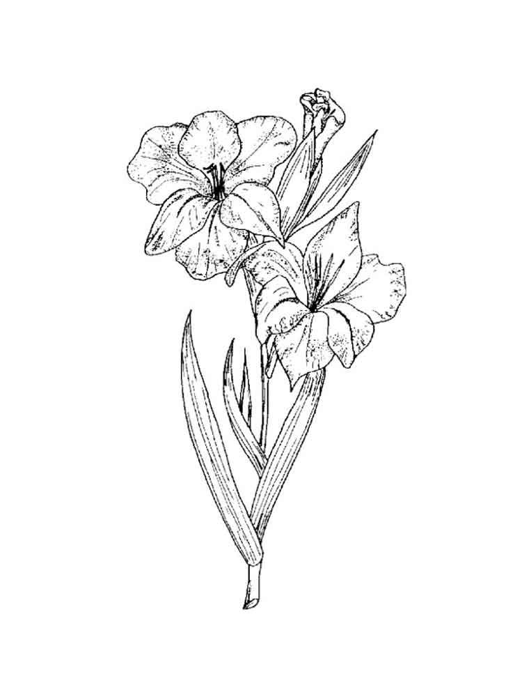 ausmalbilder gladiolen  malvorlagen kostenlos zum ausdrucken