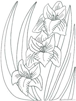 Gladiolus-flower-coloring-pages-1