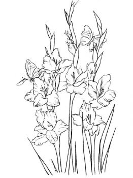 Gladiolus-flower-coloring-pages-11