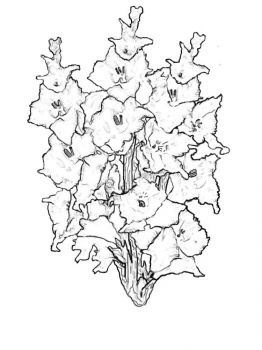 Gladiolus-flower-coloring-pages-8