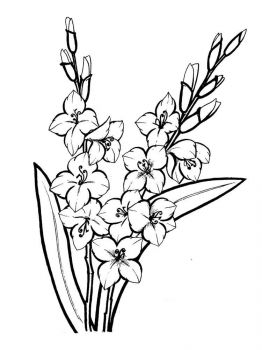 Gladiolus-flower-coloring-pages-9