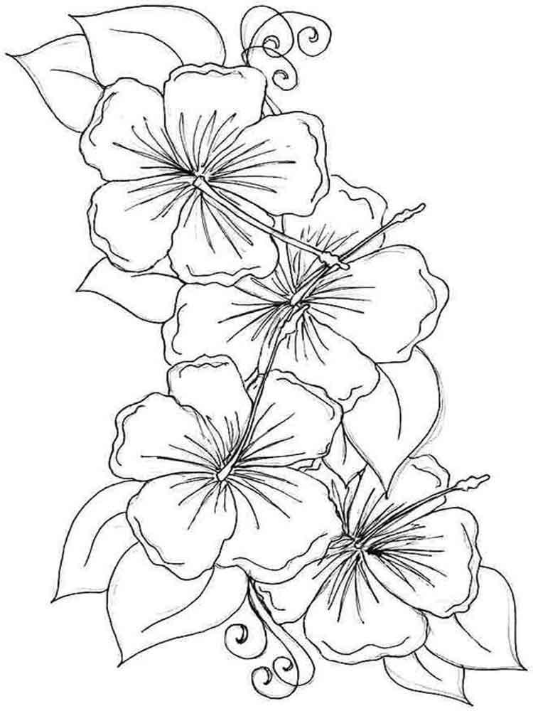 ausmalbilder hibiskus - malvorlagen kostenlos zum ausdrucken