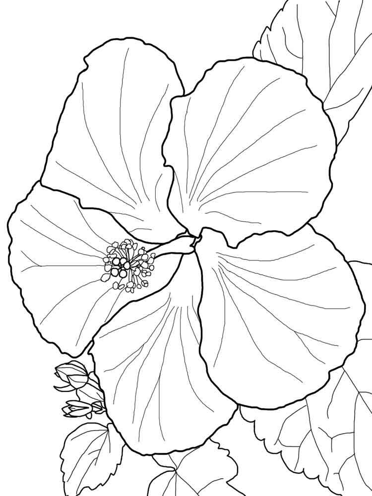 ausmalbilder hibiskus  malvorlagen kostenlos zum ausdrucken
